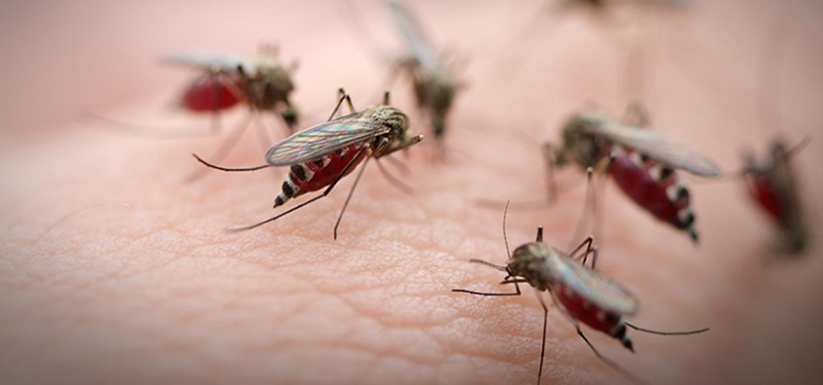 Làm thế nào để chọn đúng loại thuốc đuổi muỗi?