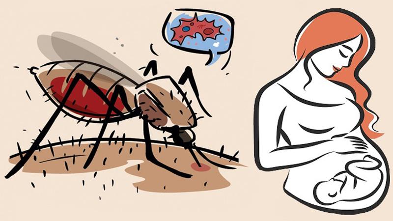 Phòng chống muỗi đốt (chích) ĐÚNG CÁCH cho bà bầu: ÁP DỤNG NGAY!