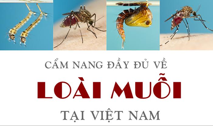 Kiến thức về Con muỗi: Cẩm nang đầy đủ nhất!