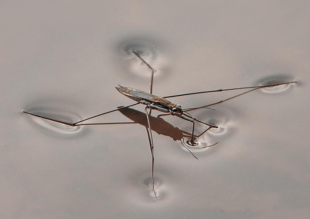 Tìm hiểu về loài muỗi - Môi trường sống
