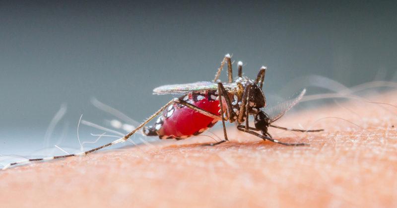 Tìm hiểu về loài muỗi - Thức ăn